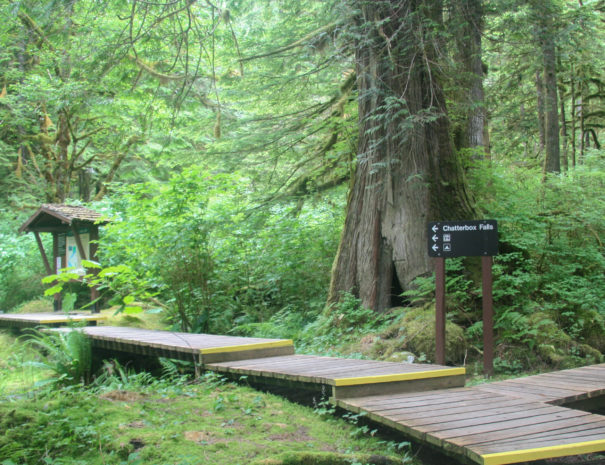 The,Path,To,Chatterbox,Falls.,A,Verdant,,Old,Growth,Forest