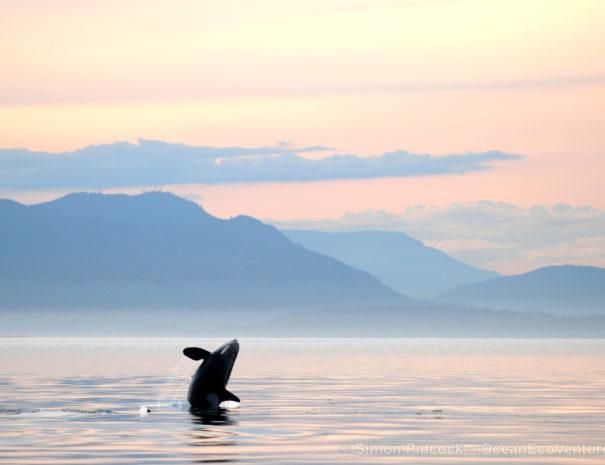 Sunset Orcas Parksville Whale Watch
