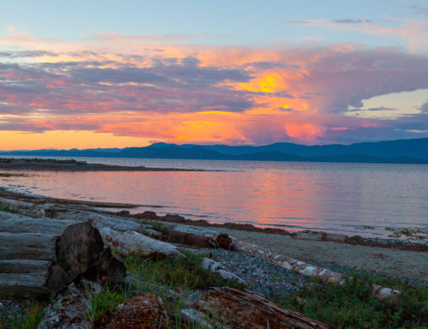 Parksville Whale and Wildlife Adventures